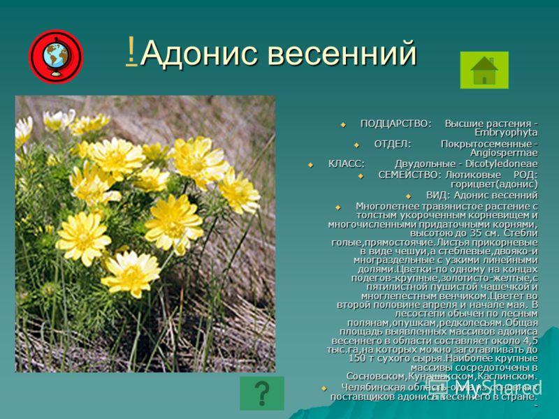 Адонис весенний ПОДЦАРСТВО: Высшие растения - Embryophyta ПОДЦАРСТВО: Высшие растения - Embryophyta ОТДЕЛ: Покрытосеменные - Angiospermae ОТДЕЛ: Покрытосеменные - Angiospermae КЛАСС: Двудольные - Dicotyledoneae КЛАСС: Двудольные - Dicotyledoneae СЕМЕ