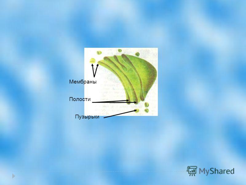Мембраны Полости Пузырьки