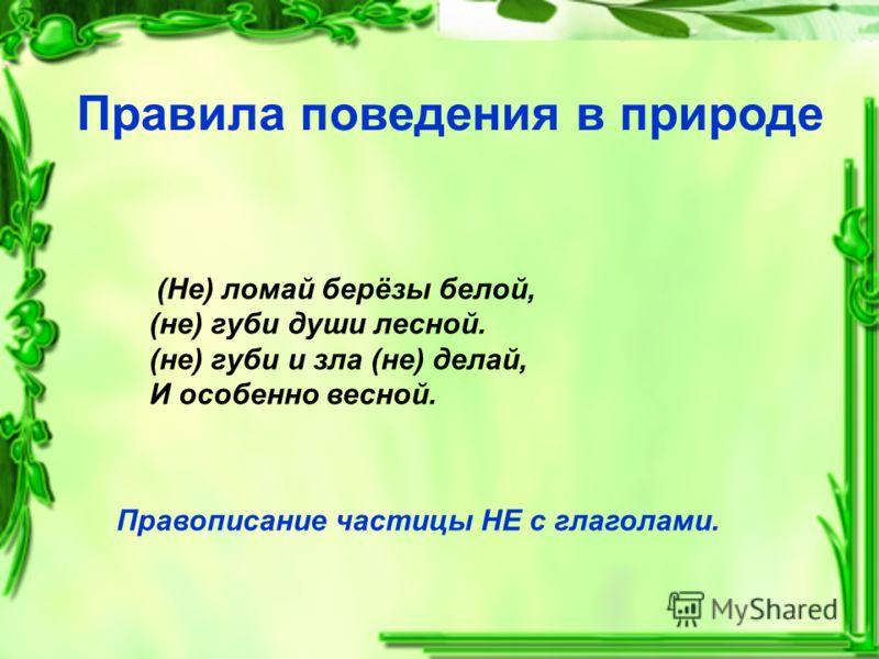 Правила поведения в природе (Не) ломай берёзы белой, (не) губи души лесной. (не) губи и зла (не) делай, И особенно весной. Правописание частицы НЕ с глаголами.