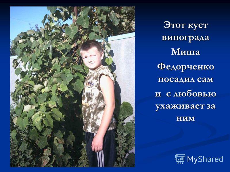 Этот куст винограда Миша Федорченко посадил сам и с любовью ухаживает за ним