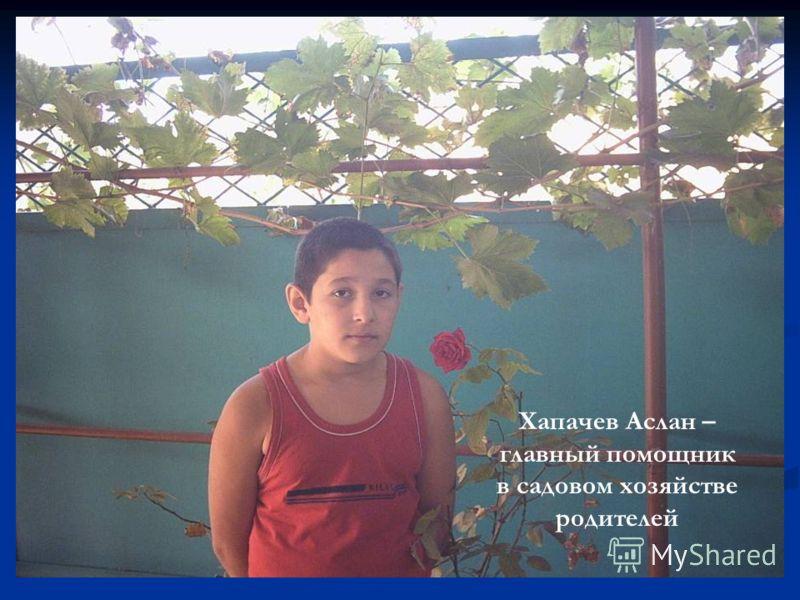 Хапачев Аслан – главный помощник в садовом хозяйстве родителей