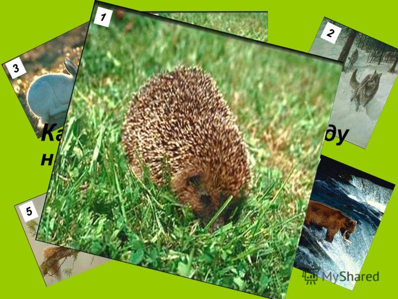 3 1 2 4 5 6 К акое животное носит еду на спине? 1