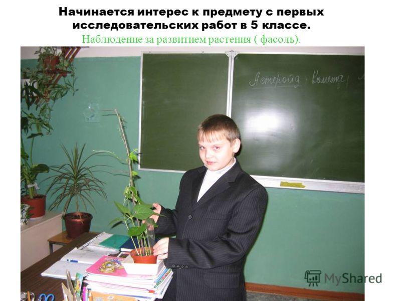 Начинается интерес к предмету с первых исследовательских работ в 5 классе. Наблюдение за развитием растения ( фасоль).