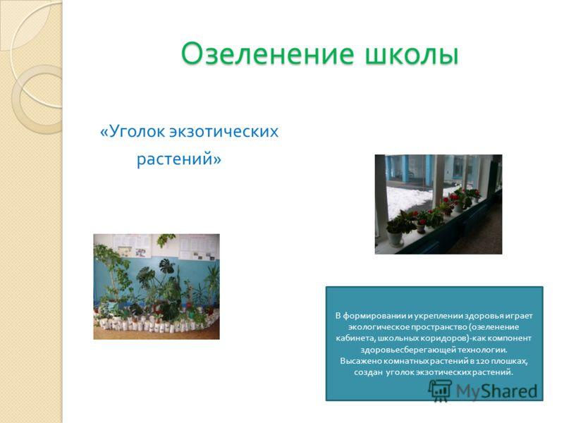 Озеленение школы « Уголок экзотических растений » В формировании и укреплении здоровья играет экологическое пространство ( озеленение кабинета, школьных коридоров )- как компонент здоровьесберегающей технологии. Высажено комнатных растений в 120 плош