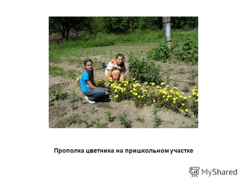 Прополка цветника на пришкольном участке