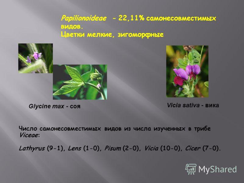Papilionoideae - 22,11% самонесовместимых видов. Цветки мелкие, зигоморфные Glycine max - соя Vicia sativa - вика Число самонесовместимых видов из числа изученных в трибе Viceae: Lathyrus (9-1), Lens (1-0), Pisum (2-0), Vicia (10-0), Cicer (7-0).