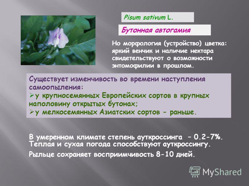 Pisum sativum L. Бутонная автогамия Но морфология (устройство) цветка: яркий венчик и наличие нектара свидетельствуют о возможности энтомофилии в прошлом. Существует изменчивость во времени наступления самоопыления: у крупносемянных Европейских сорто