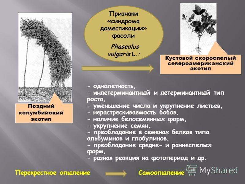 - однолетность, - индетерминантный и детерминантный тип роста, - уменьшение числа и укрупнение листьев, - нерастрескиваемость бобов, - наличие белосемянных форм, - укрупнение семян, - преобладание в семенах белков типа альбуминов и глобулинов, - прео