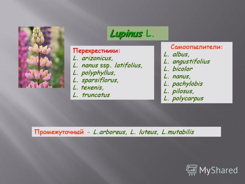 Lupinus Lupinus L. Перекрестники: L. arizonicus, L. nanus ssp. latifolius, L. polyphyllus, L. sparsiflorus, L. texenis, L. truncatus Самоопылители: L. albus, L. angustifolius L. bicolor L. nanus, L. pachylobis L. pilosus, L. polycarpus Промежуточный