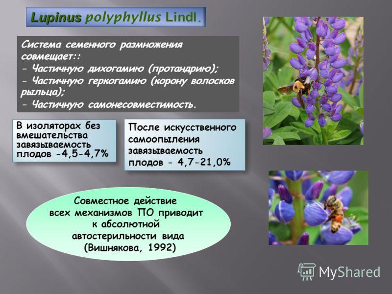 Система семенного размножения совмещает:: - Частичную дихогамию (протандрию); - Частичную геркогамию (корону волосков рыльца); - Частичную самонесовместимость. После искусственного самоопыления завязываемость плодов - 4,7-21,0% Lupinus Lupinus polyph