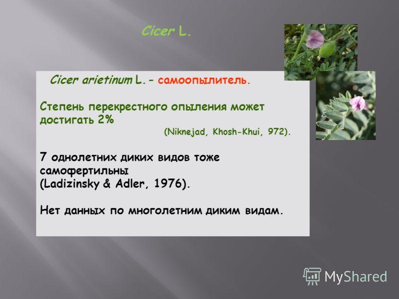 Cicer L. Cicer arietinum L.- самоопылитель. Степень перекрестного опыления может достигать 2% (Niknejad, Khosh-Khui, 972). 7 однолетних диких видов тоже самофертильны (Ladizinsky & Adler, 1976). Нет данных по многолетним диким видам.