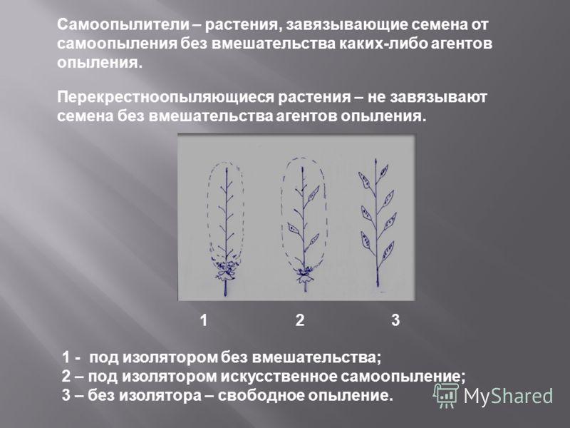 Самоопылители – растения, завязывающие семена от самоопыления без вмешательства каких - либо агентов опыления. Перекрестноопыляющиеся растения – не завязывают семена без вмешательства агентов опыления. 1 - под изолятором без вмешательства ; 2 – под и