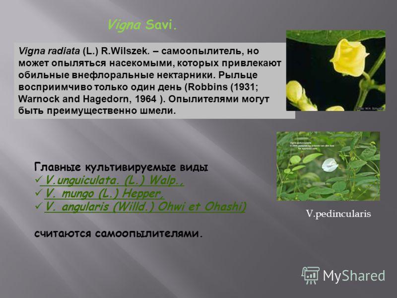 Vigna radiata (L.) R.Wilszek. – самоопылитель, но может опыляться насекомыми, которых привлекают обильные внефлоральные нектарники. Рыльце восприимчиво только один день (Robbins (1931; Warnock and Hagedorn, 1964 ). Опылителями могут быть преимуществе