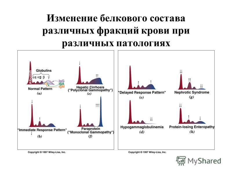 Изменение белкового состава различных фракций крови при различных патологиях