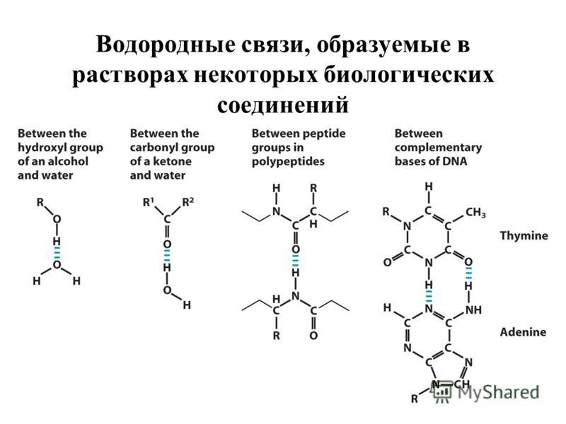 Водородные связи, образуемые в растворах некоторых биологических соединений