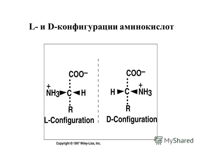 L- и D-конфигурации аминокислот