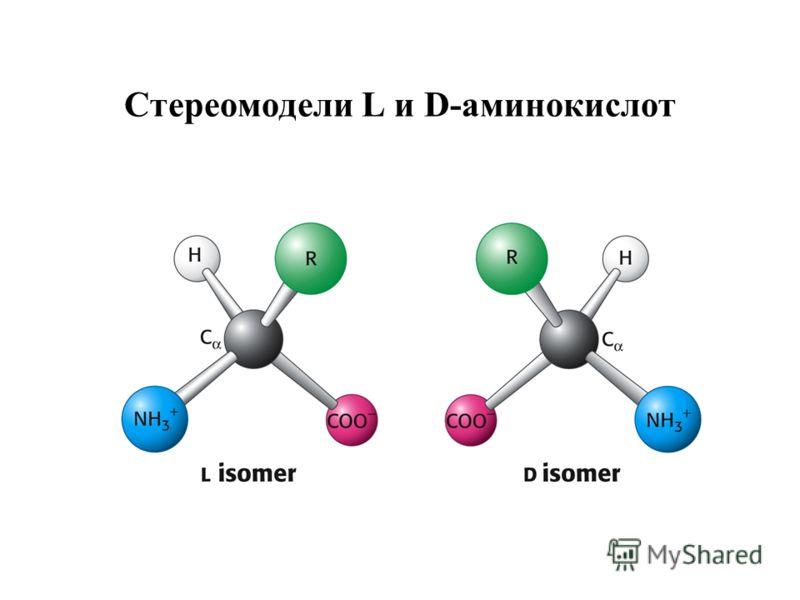Стереомодели L и D-аминокислот