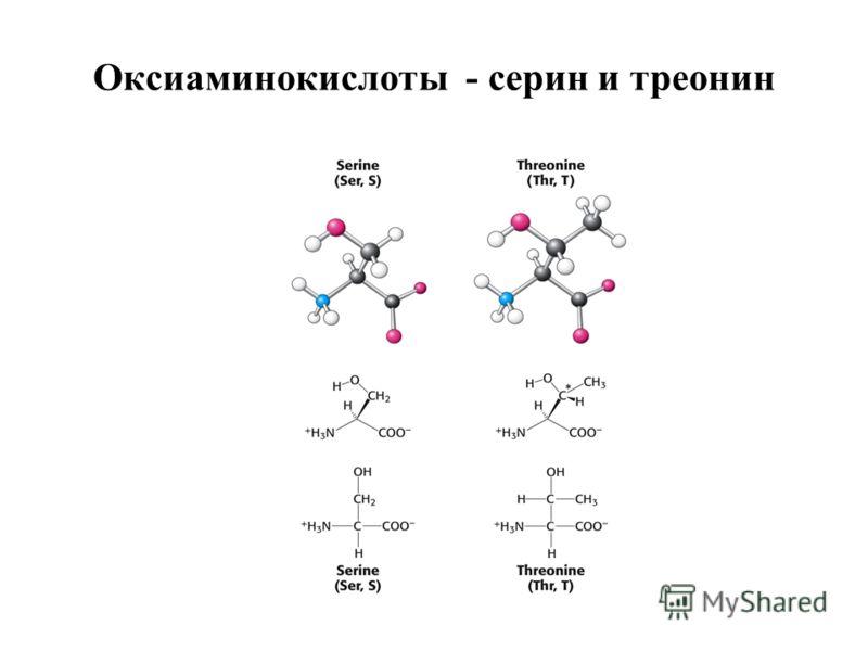 Оксиаминокислоты - серин и треонин