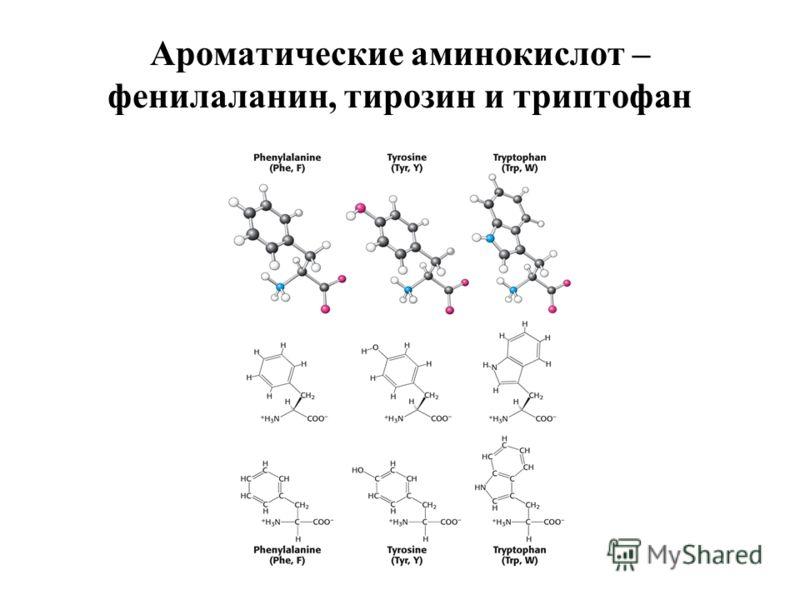 Ароматические аминокислот – фенилаланин, тирозин и триптофан
