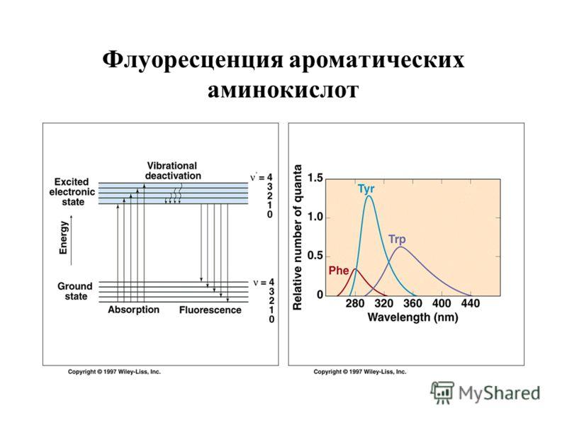 Флуоресценция ароматических аминокислот