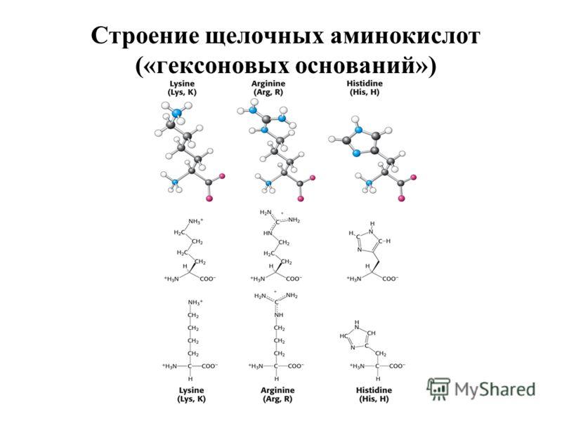 Строение щелочных аминокислот («гексоновых оснований»)