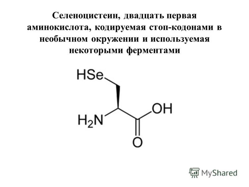 Селеноцистеин, двадцать первая аминокислота, кодируемая стоп-кодонами в необычном окружении и используемая некоторыми ферментами