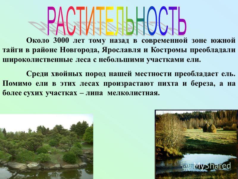 Около 3000 лет тому назад в современной зоне южной тайги в районе Новгорода, Ярославля и Костромы преобладали широколиственные леса с небольшими участками ели. Среди хвойных пород нашей местности преобладает ель. Помимо ели в этих лесах произрастают
