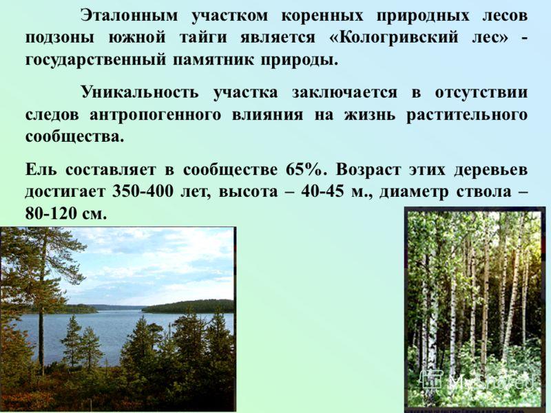 Эталонным участком коренных природных лесов подзоны южной тайги является «Кологривский лес» - государственный памятник природы. Уникальность участка заключается в отсутствии следов антропогенного влияния на жизнь растительного сообщества. Ель составл