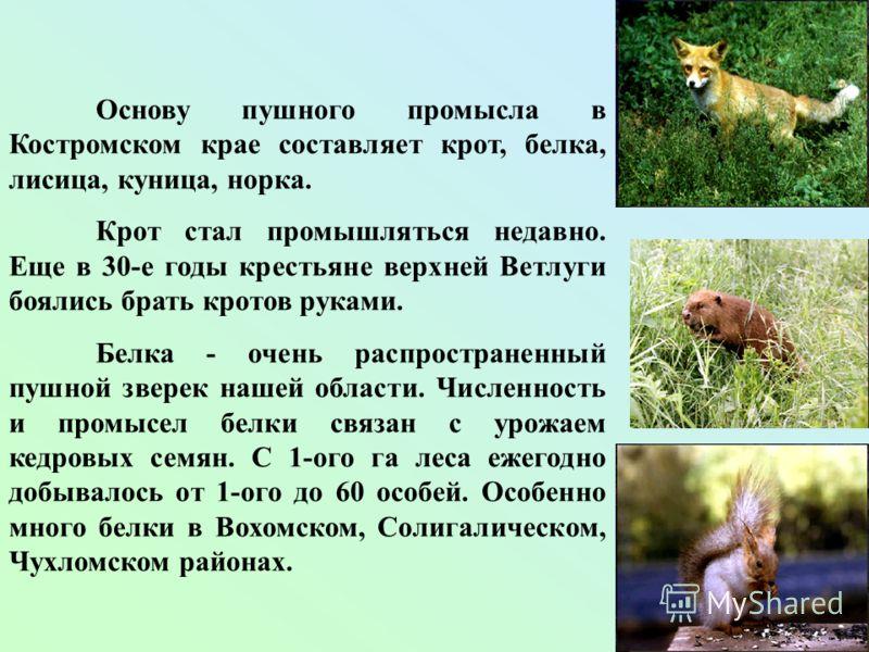 Основу пушного промысла в Костромском крае составляет крот, белка, лисица, куница, норка. Крот стал промышляться недавно. Еще в 30-е годы крестьяне верхней Ветлуги боялись брать кротов руками. Белка - очень распространенный пушной зверек нашей област