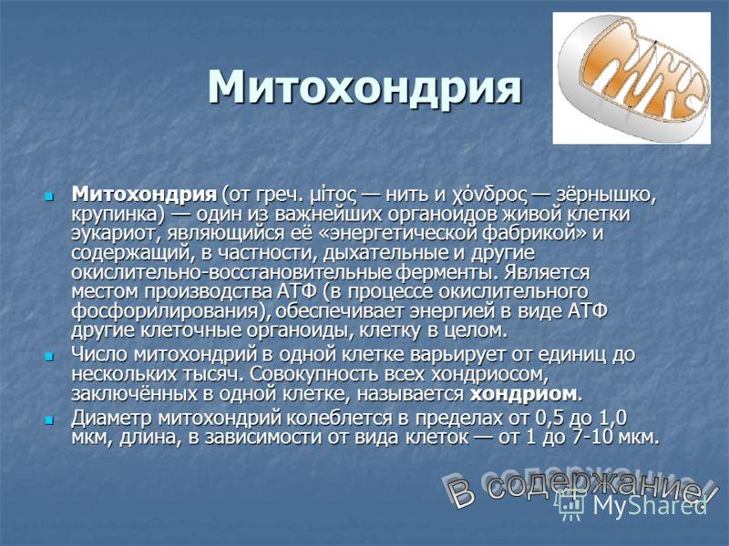 Митохондрия Митохондрия (от греч. μίτος нить и χόνδρος зёрнышко, крупинка) один из важнейших органоидов живой клетки эукариот, являющийся её «энергетической фабрикой» и содержащий, в частности, дыхательные и другие окислительно-восстановительные ферм
