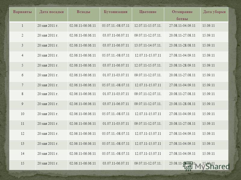 ВариантыДата посадкиВсходыБутонизацияЦветение Отмирание ботвы Дата уборки 120 мая 2011 г.02.06.11-06.06.1105.07.11.-08.07.1112.07.11-15.07.11.27.08.11-04.09.1115.09.11 220 мая 2011 г.02.06.11-06.06.1103.07.11-06.07.1109.07.11-12.07.11.20.08.11-27.08.