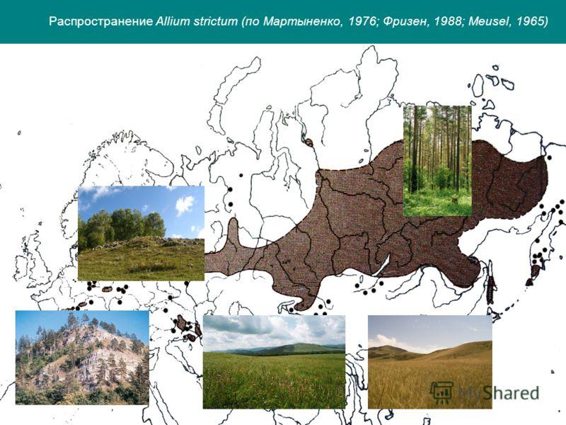 Распространение Allium strictum (по Мартыненко, 1976; Фризен, 1988; Meusel, 1965)