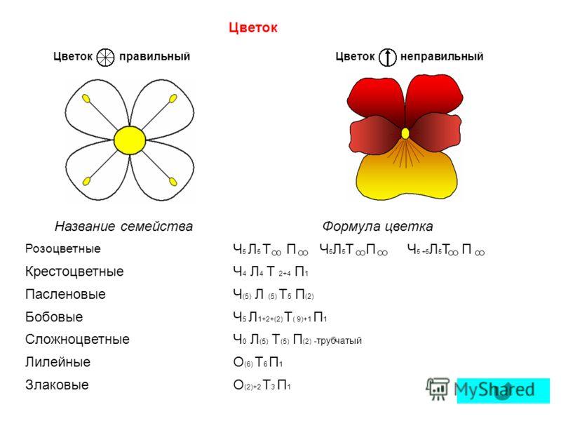 ЦветокправильныйнеправильныйЦветок Название семействаФормула цветка Розоцветные Ч 5 Л 5 Т П Ч 5 Л 5 Т П Ч 5 +5 Л 5 Т П КрестоцветныеЧ 4 Л 4 Т 2+4 П 1 ПасленовыеЧ (5) Л (5) Т 5 П (2) БобовыеЧ 5 Л 1+2+(2) Т ( 9)+1 П 1 СложноцветныеЧ 0 Л (5) Т (5) П (2)
