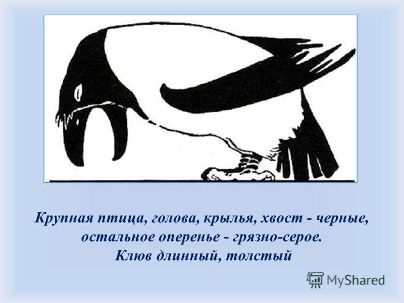 Крупная птица, голова, крылья, хвост - черные, остальное оперенье - грязно-серое. Клюв длинный, толстый Уж сколько раз твердили миру, Что лесть гнусна, вредна; но только всё не впрок, И в сердце льстец всегда отыщет уголок. 1.