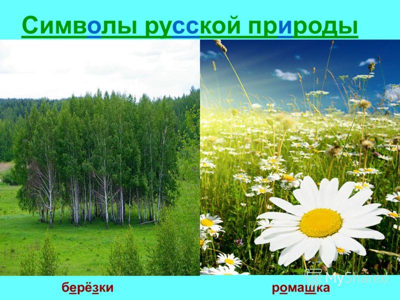 Символы русской природы берёзкиромашка