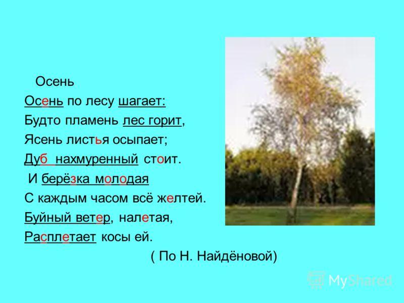 Осень Осень по лесу шагает: Будто пламень лес горит, Ясень листья осыпает; Дуб нахмуренный стоит. И берёзка молодая С каждым часом всё желтей. Буйный ветер, налетая, Расплетает косы ей. ( По Н. Найдёновой)
