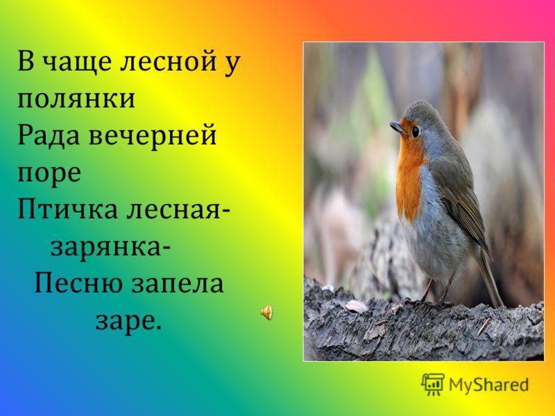 В чаще лесной у полянки Рада вечерней поре Птичка лесная- зарянка- Песню запела заре.