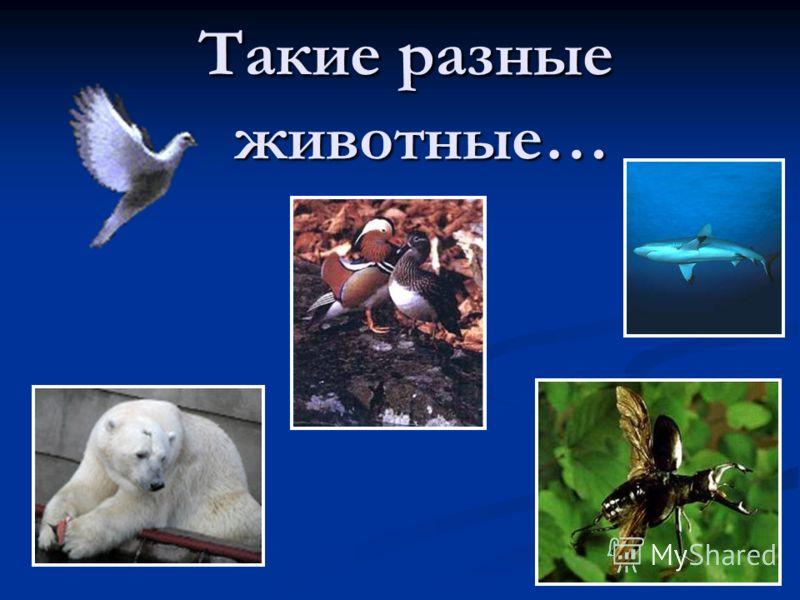 Такие разные животные…