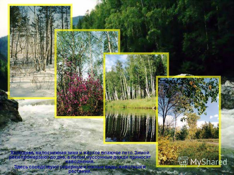Холодная, малоснежная зима и жаркое влажное лето. Зимой реки промерзают до дна, а летом муссонные дожди приносят наводнения. Здесь соседствуют северные и южные виды животных и растений.