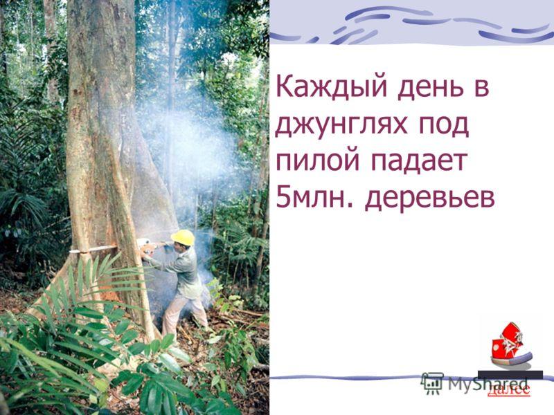 Каждый день в джунглях под пилой падает 5млн. деревьев далее