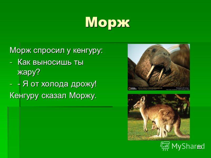 20 Морж Морж спросил у кенгуру: -Как выносишь ты жару? -- Я от холода дрожу! Кенгуру сказал Моржу.