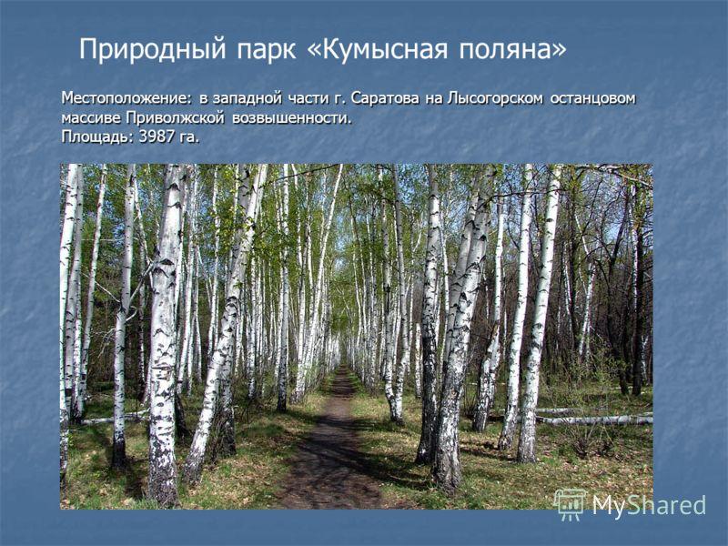 Природный парк «Кумысная поляна» Местоположение: в западной части г. Саратова на Лысогорском останцовом массиве Приволжской возвышенности. Площадь: 3987 га.