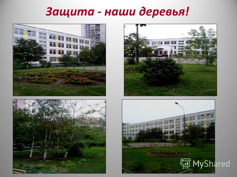Защита - наши деревья!