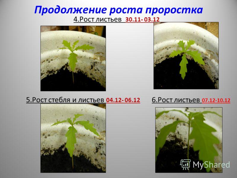 Продолжение роста проростка 4.Рост листьев 30.11- 03.12 5.Рост стебля и листьев 04.12- 06.12 6.Рост листьев 07.12-10.12