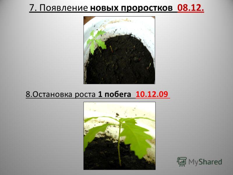 7. Появление новых проростков 08.12. 8.Остановка роста 1 побега 10.12.09