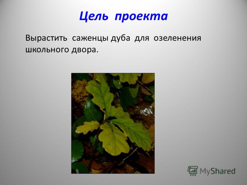 Цель проекта Вырастить саженцы дуба для озеленения школьного двора.