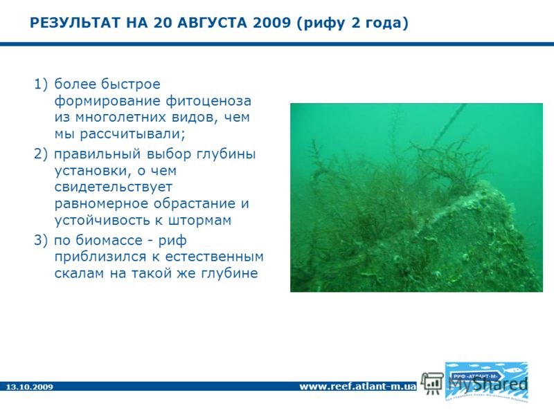 13.10.2009 www.reef.atlant-m.ua РЕЗУЛЬТАТ НА 20 АВГУСТА 2009 (рифу 2 года) 1)более быстрое формирование фитоценоза из многолетних видов, чем мы рассчитывали; 2) правильный выбор глубины установки, о чем свидетельствует равномерное обрастание и устойч