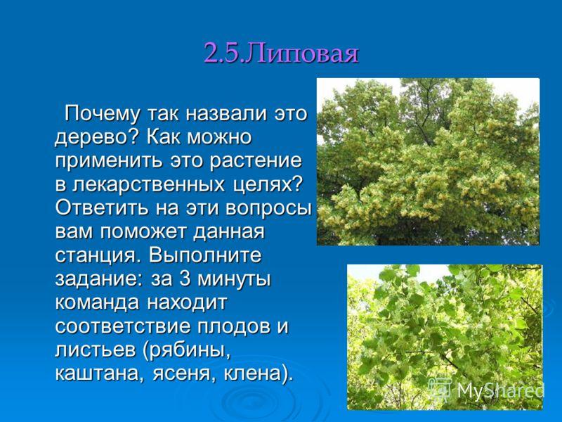 2.5.Липовая Почему так назвали это дерево? Как можно применить это растение в лекарственных целях? Ответить на эти вопросы вам поможет данная станция. Выполните задание: за 3 минуты команда находит соответствие плодов и листьев (рябины, каштана, ясен