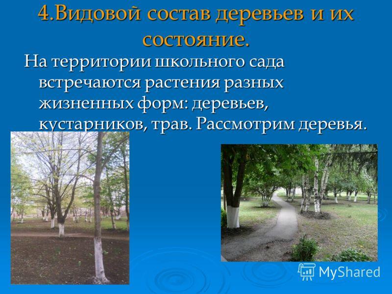 4.Видовой состав деревьев и их состояние. На территории школьного сада встречаются растения разных жизненных форм: деревьев, кустарников, трав. Рассмотрим деревья.