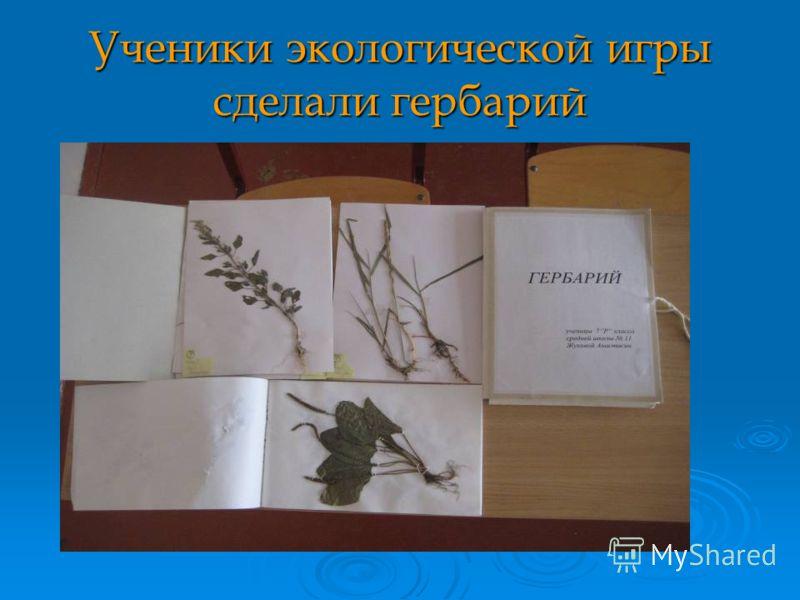 Ученики экологической игры сделали гербарий